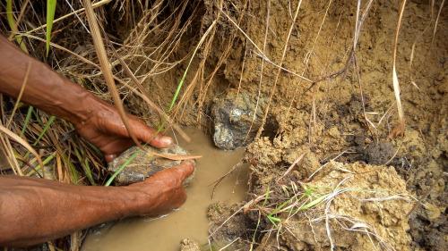 Pecahan fosil yang ditemukan insitu di lapangan